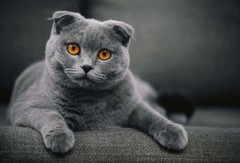 Twitter'ı Sallayan Kedi!