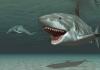 Günümüzde Megalodon Köpekbalığının Yaşadığının 5 Kanıtı!